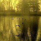 Golden Mist by Madeline M  Allen