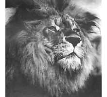 Lion Pencil Drawing by onlypencil