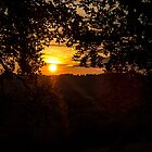 Sunset through Trees by Pixie Copley LRPS