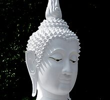White Buddha by Dave Lloyd