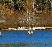 Driftwood by WildestArt
