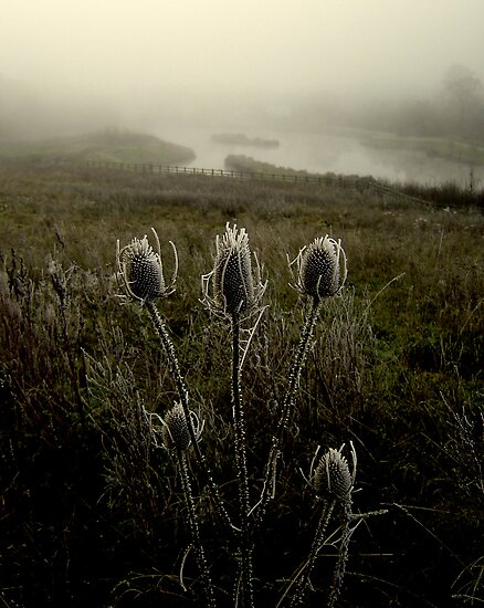 Freezing Teasle by David Harris