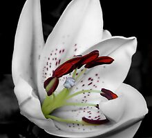 Oriental Lily by Cheri Perry