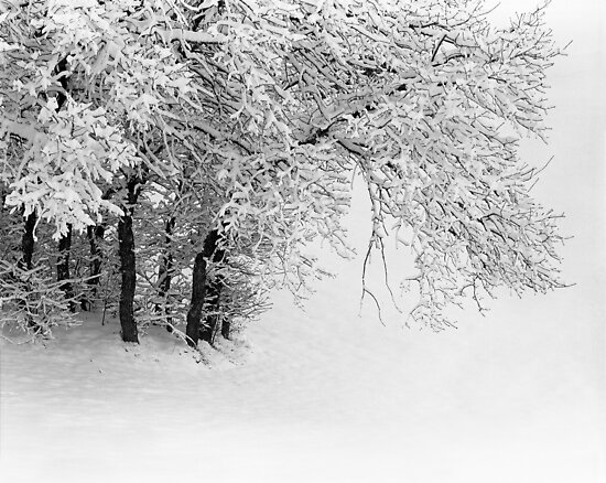 Snowy Trees by mymamiya