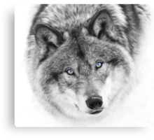 Wolf Eyes - Timber Wolf Canvas Print