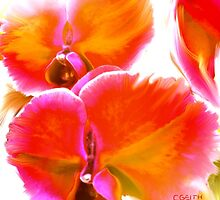 Orchids Ablaze by Christine Geith