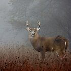 Big Buck - White-tailed deer Buck by Jim Cumming