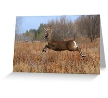 Through the Air - White-tailed Deer Buck Greeting Card