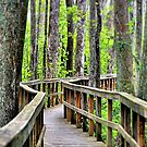 A Walk to Remember by photomama4