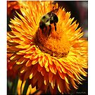 Busy Busy Bee by Madeline M  Allen