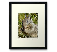 Breakfast of champions.. Cambria California Framed Print