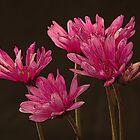 Reddish flower group by dmiller804