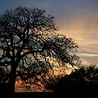 sundown oak 93 by Brenda Loveless