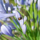 Bug in the Blue by Penny Smith