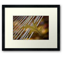 Leaf on a Rope Framed Print