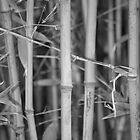 Bamboo by PhotoNinja