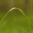 Blade of grass by pturner