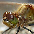 Dragonfly,  Portrait by Geoffrey