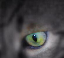 Cat's Eye by Karen Martin IPA