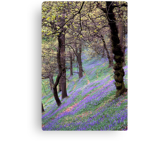 English Bluebell Wood Canvas Print