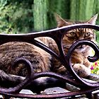 My lovely Sister's lovely Cat by AndyReeve
