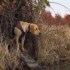 Duck Dog by Gretchen  Mueller Steele