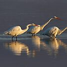 Fishing - Great Egrets by Jim Cumming