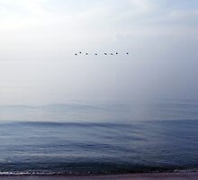 birds flying over the sea by Olja Merker