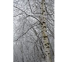 Its Snow Time of Year Photographic Print