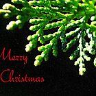 Christmas Fir by Scott Mitchell