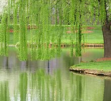 Willow Reflection by digerati