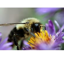 I'm glad I don't have pollen allergies! Photographic Print