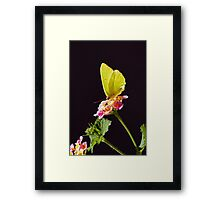 Yellow Butterfly Framed Print