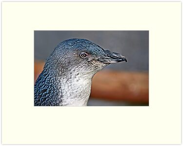 Little Blue Penguin by Robyn Carter