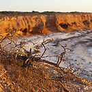 Sunrise, cliffs and sticks by robertp