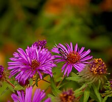 Flying Insect on Purple Flower by MegaPixel