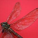 Dragonfly on red by allisond