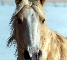 more Blond Beauty  by nastruck