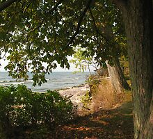Peek through the trees by marts1