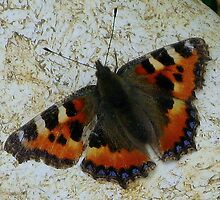 Small Tortoiseshell Butterfly by Sharon Perrett