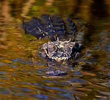 Dark Water Predator by DawsonImages
