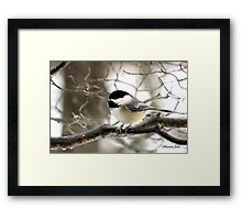 I Spy a January Thaw ~ Chickadee   Framed Print