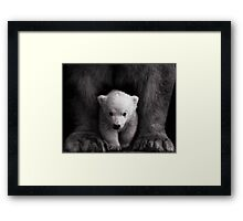 Ursa Major & Minor Framed Print