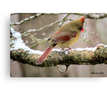 You'd Think Her Feet Would Freeze! Canvas Print