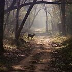 Corbett N.P., India by retsilla