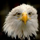 Sea Eagle by PhotoDream Art