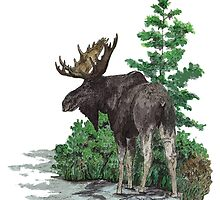 Moose watercolor  by saltypro