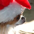 Christmas Pooch by Trace Lowe