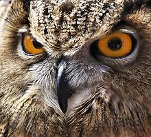 Golden Eyes by Diane Blackford