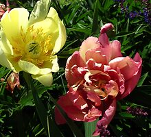 For the love of Peonies by MarianBendeth